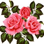 "Клеенка на тк/о ПЕРМЬ 1,3х25м ""Роза на стекле"" (без фона)"